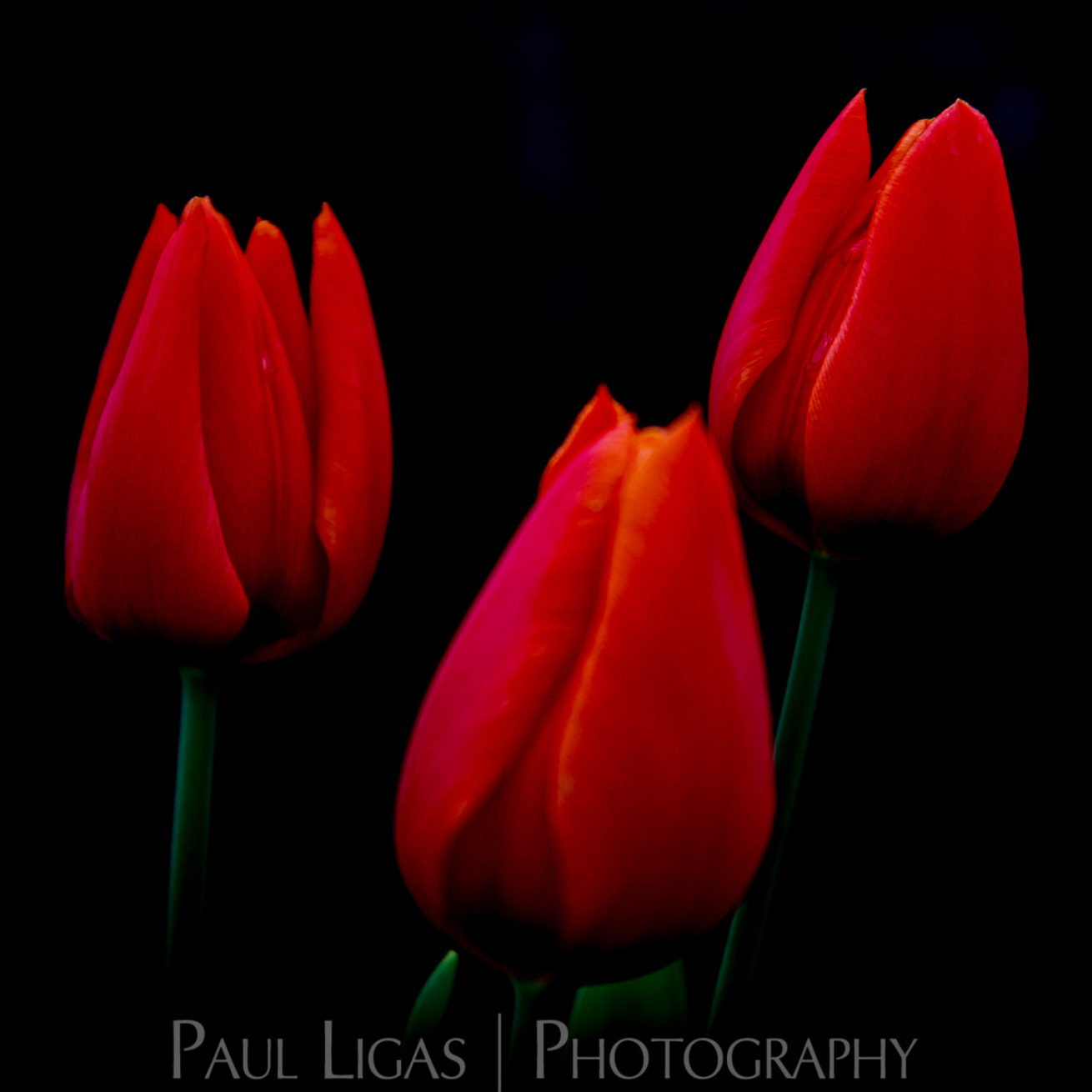 Mill House Farm product photographer hereford photography flowers 0449