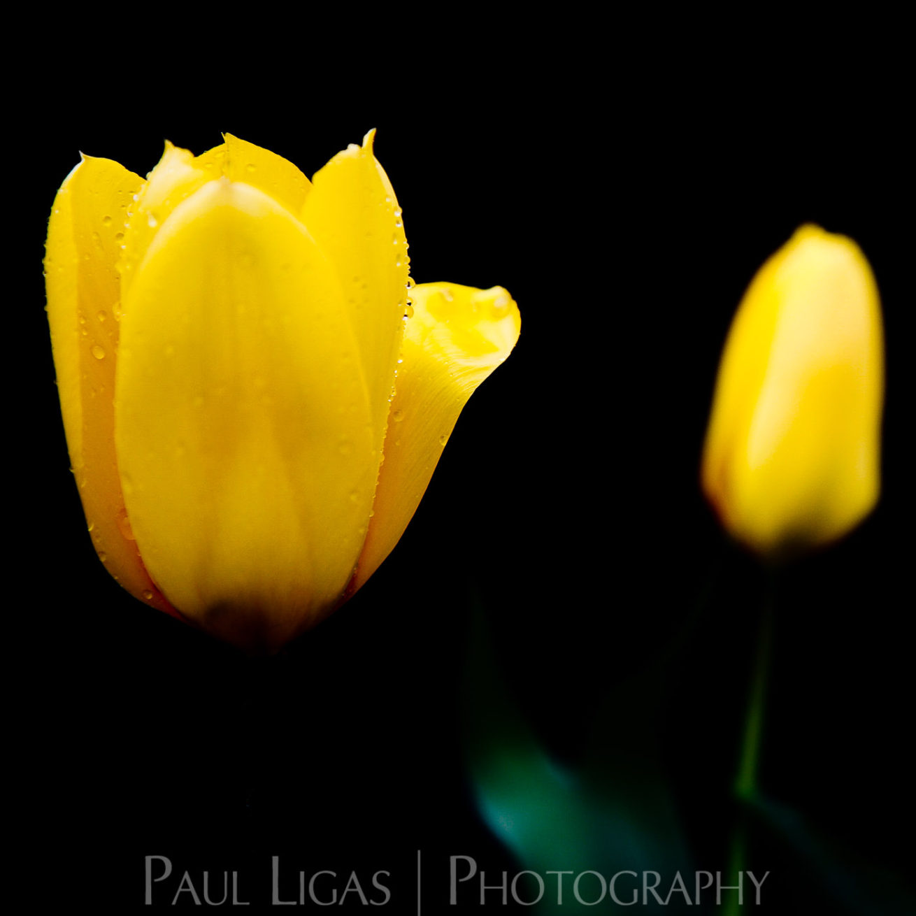 Mill House Farm product photographer hereford photography flowers 0493