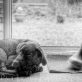 Pet photographer photography hereford 3827