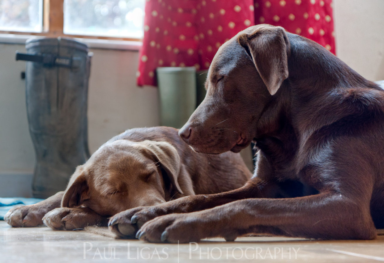 Pet photographer photography hereford 8882