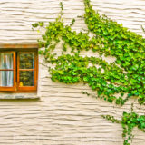 Cottage wall, Croyde, Devon, fine art photographer architecture photography herefordshire 0447