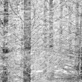 Evergreen plantation near Belwood Ontario, landscapes and nature photographer photography herefordshire 0346