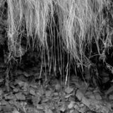 Grass in the Teign Valley, landscapes and nature photographer photography herefordshire 8725