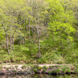 River Teign, Devon, landscapes and nature photographer photography herefordshire 3999