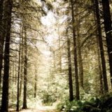Woodland in Ontario, landscapes and nature photographer photography herefordshire 0354
