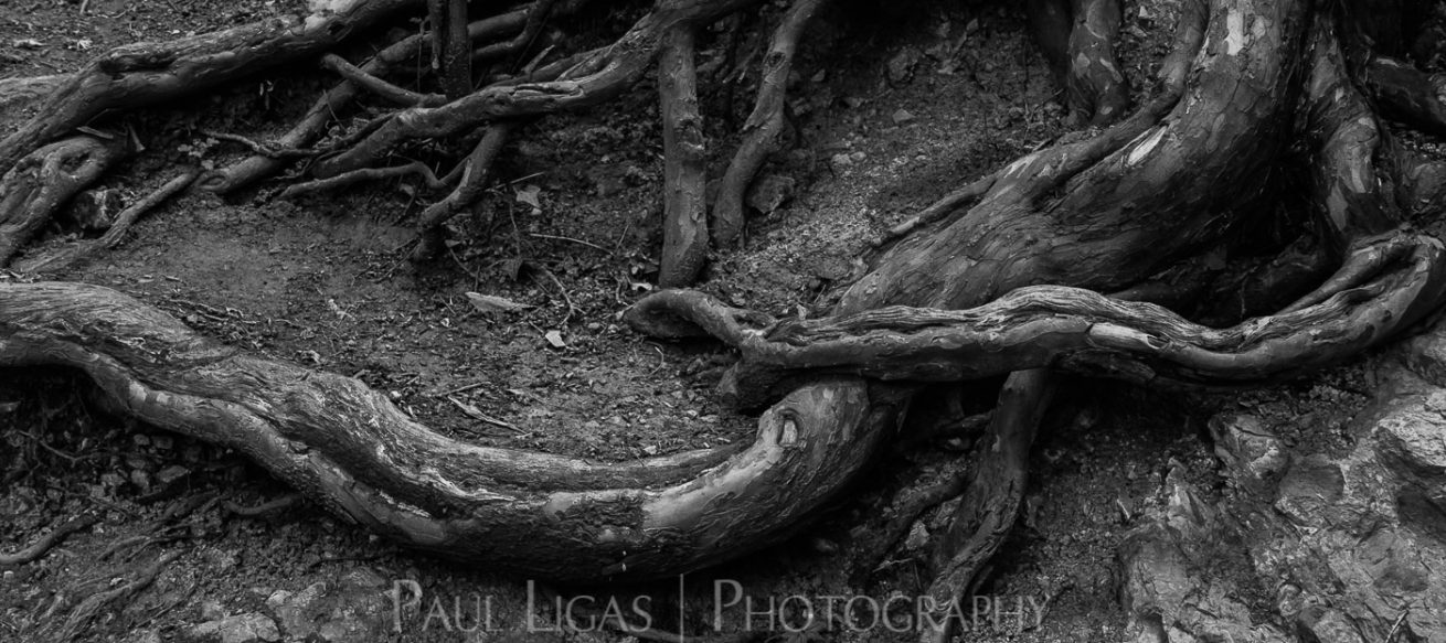Dog Hill Wood, Ledbury, Herefordshire nature photographer photography landscape 6967