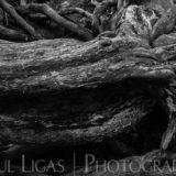 Dog Hill Wood, Ledbury, Herefordshire nature photographer photography landscape 6969