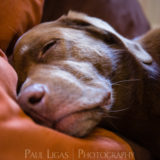Pet photographer photography Herefordshire 0020