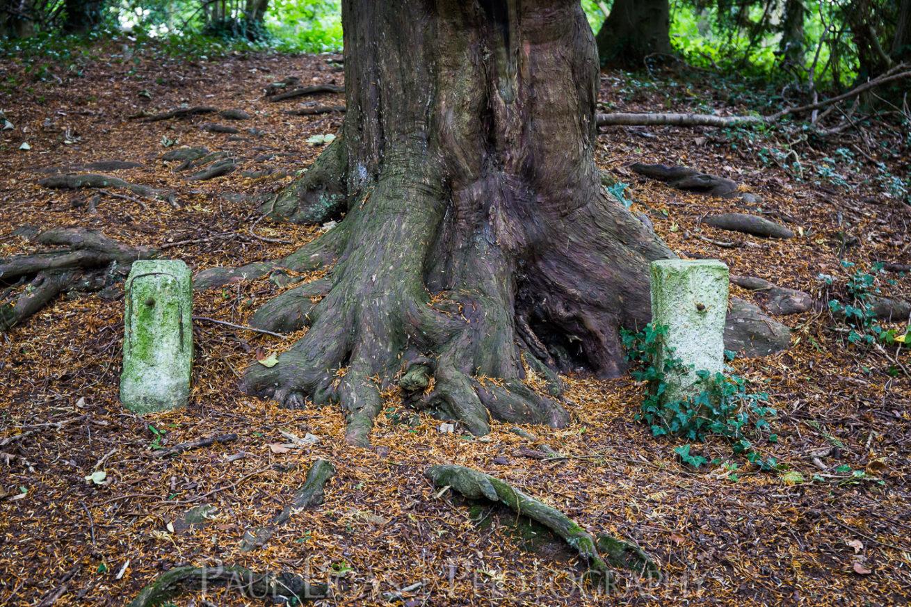 Dog Hill Wood, Ledbury, Herefordshire in Summer nature photographer photography landscape 0655