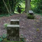 Dog Hill Wood, Ledbury, Herefordshire in Summer nature photographer photography landscape 0658