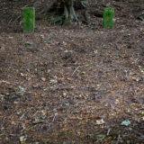 Dog Hill Wood, Ledbury, Herefordshire in Summer nature photographer photography landscape 0665