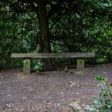 Dog Hill Wood, Ledbury, Herefordshire in Summer nature photographer photography landscape 0674