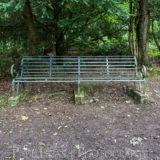 Dog Hill Wood, Ledbury, Herefordshire in Summer nature photographer photography landscape 0698