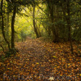 Dog Hill Wood, Ledbury, Herefordshire in Autumn nature photographer photography landscape 2697