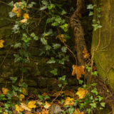 Dog Hill Wood, Ledbury, Herefordshire in Autumn nature photographer photography landscape 2656