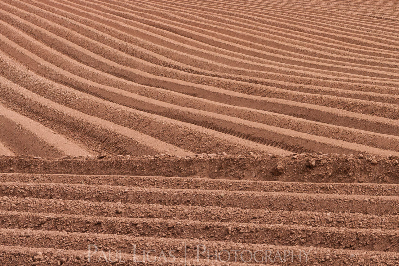 Furrows in Bromyard, herefordshire farming agriculture photographer landscape photography 7164