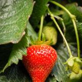 Haygrove Limited, Ledbury, Herefordshire farming agriculture photographer photography 4143