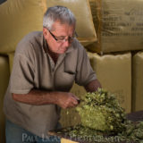 Townend Hop Farm, Herefordshire farming agriculture portrait photographer photography 2380
