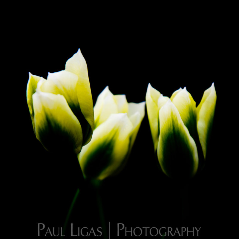 Mill House Farm product photographer photography hereford flowers 0430
