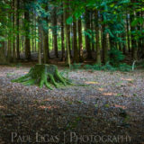 Forestry, fine art photography photographer herefordshire 4329
