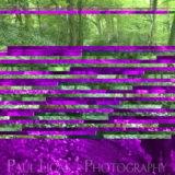 Mobile phone camera error, fine art photographer photography herefordshire 2008