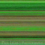 Mobile phone camera error, fine art photographer photography herefordshire 6062