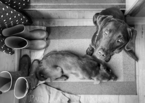 Waiting, Animal and Pet photographer Photography herefordshire