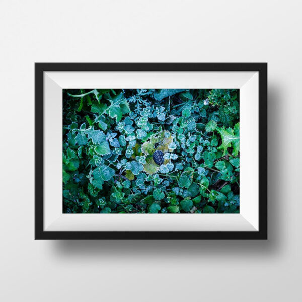 Paul Ligas Photography Print Frosty Morning Leaves mock up