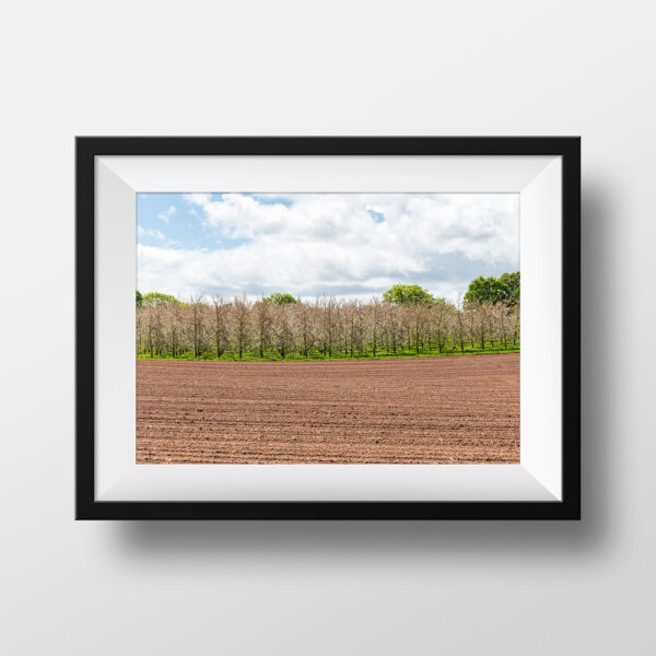 Paul Ligas Photography Print Herefordshire Orchard in Sunshine