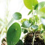 Spiffy Daisy plants kokedama product lifestyle photographer photography Herefordshire-5378