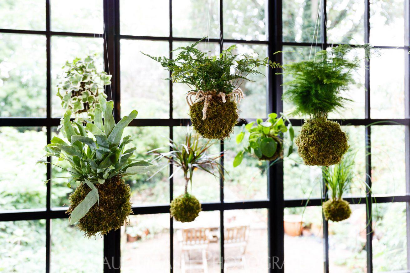 Spiffy Daisy plants kokedama product lifestyle photographer photography Herefordshire-7136-Edit