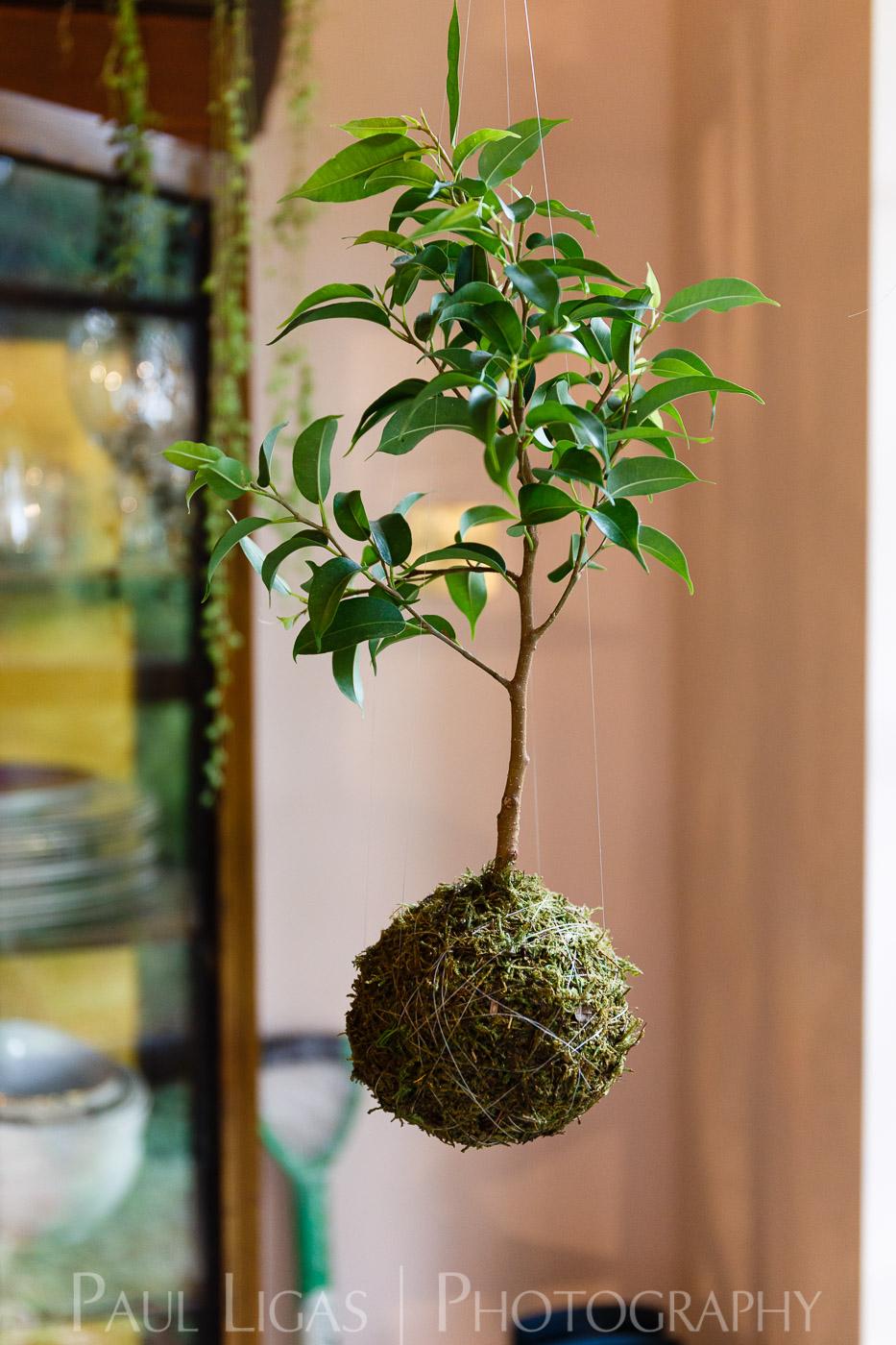 Spiffy Daisy plants kokedama product lifestyle photographer photography Herefordshire-7142