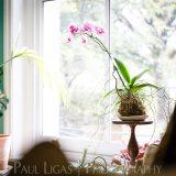Spiffy Daisy plants kokedama product lifestyle photographer photography Herefordshire-7176