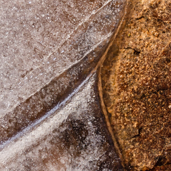 Paul Ligas Photography Print Leaf Frozen in Puddle Macro
