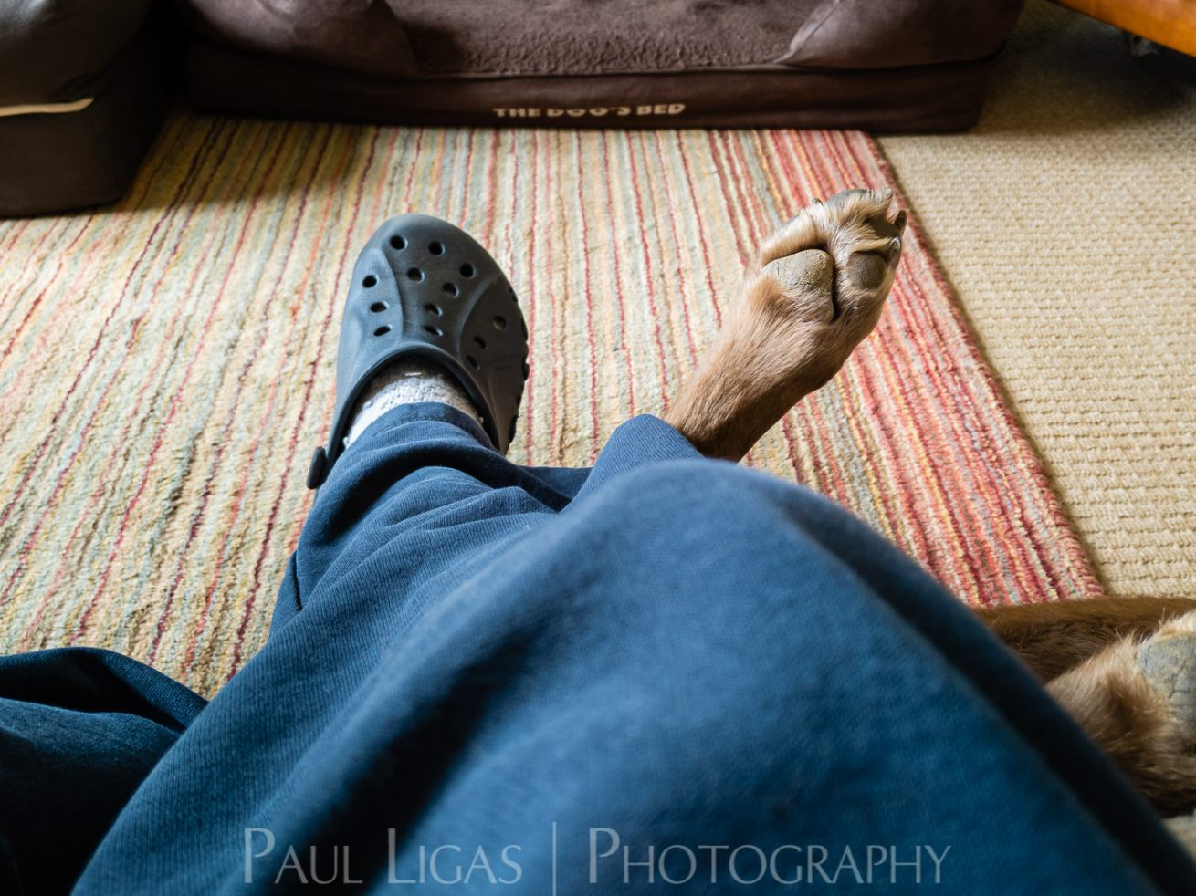 photos from inside a lockdown part 5 paul ligas photography hereford ledbury-115711