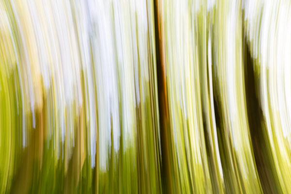 paul ligas photography print cherry tree grove frith wood ledbury herefordshire