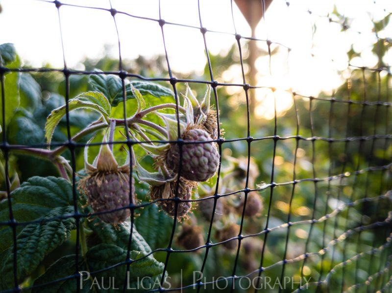 photos from inside a lockdown part 12 paul ligas photography hereford ledbury-202739