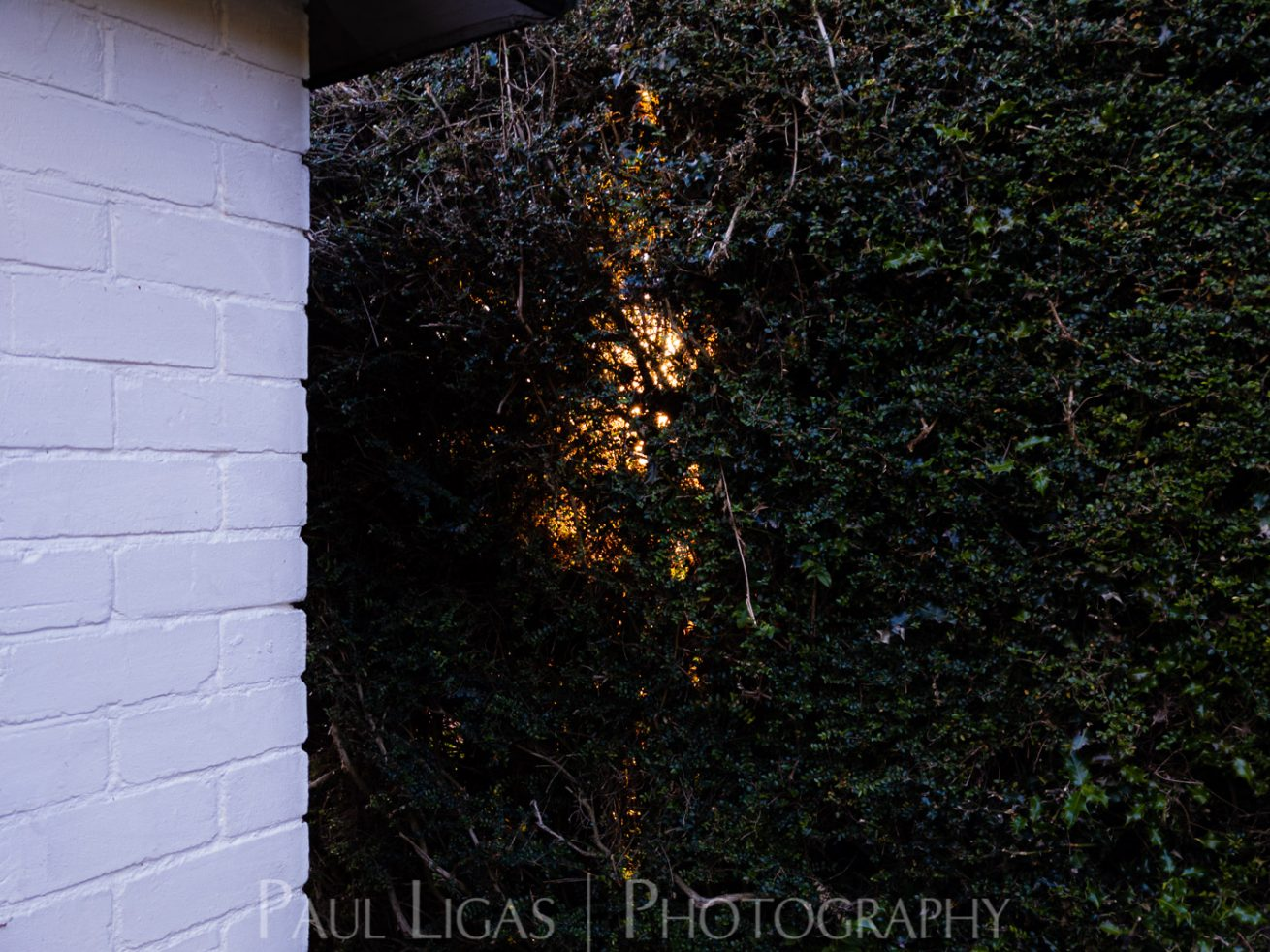 photos from inside a lockdown part 13 paul ligas photography hereford ledbury-205741